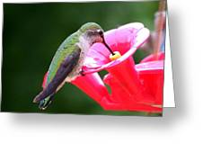 Hummingbird 33 Greeting Card