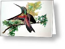 Hummingbird 5 Greeting Card