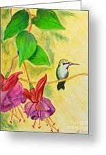 Hummingbird Amongst The Fuchsia Greeting Card