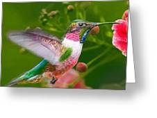 Hummingbird And Flower Painting Greeting Card