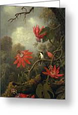 Hummingbird And Passionflowers Greeting Card