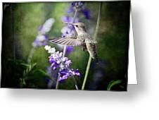 Hummingbird And Purple Lupine  Greeting Card