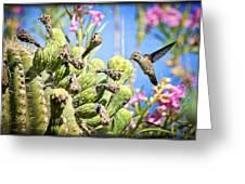 Hummingbird And The Saguaro  Greeting Card