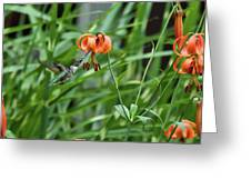 Hummingbird And Tiger Lilly Greeting Card