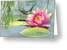 Hummingbird And Water Lily Greeting Card