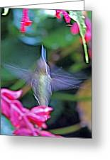 Hummingbird Angel Greeting Card