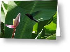 Hummingbird At Banana Flower Greeting Card by Camilla Brattemark