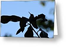 Hummingbird At Sunrise Silhouette Greeting Card