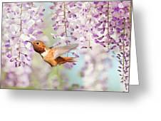 Hummingbird At Wisteria Greeting Card