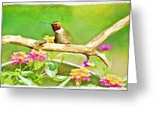Hummingbird Attitude - Digital Paint 2 Greeting Card