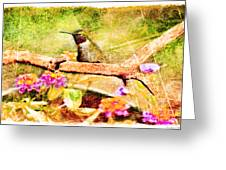 Hummingbird Attitude - Digital Paint 4 Greeting Card