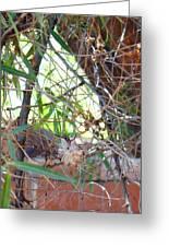 Hummingbird Babies Greeting Card