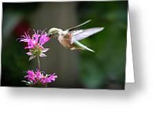 Hummingbird Beauty Greeting Card