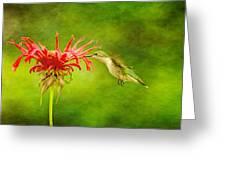 Hummingbird Bee Balm And Textures Greeting Card