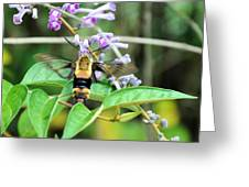 Hummingbird Bee Greeting Card