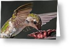 Hummingbird. Greeting Card