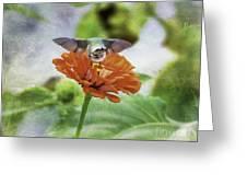 Hummingbird Bow Greeting Card