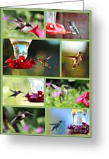 Hummingbird Collage 2 Greeting Card