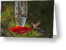 Hummingbird Coming For Dinner Greeting Card