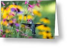 Hummingbird Dance Greeting Card by Dana Moyer