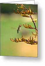 Hummingbird Drinking Nectar Greeting Card