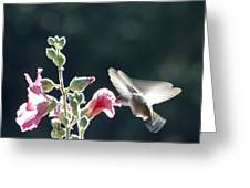 Hummingbird Drinking Pink Hollyhock Photography Greeting Card