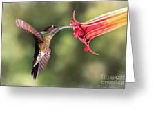 Hummingbird Enjoying Beautiful Flower Greeting Card