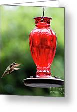 Hummingbird Feeder Greeting Card