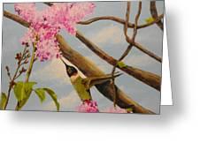 Hummingbird Feeding On Lilac Greeting Card
