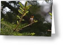 Hummingbird Flashing Greeting Card