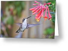 Hummingbird Happiness 2 Greeting Card