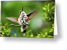 Hummingbird Happy Dance Greeting Card