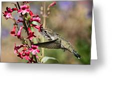 Hummingbird Haven  Greeting Card