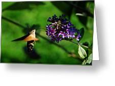 Hummingbird Hawk Moth 2 Greeting Card
