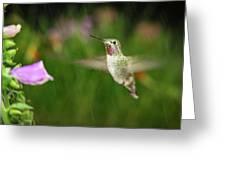 Hummingbird Hovering In Rain Greeting Card