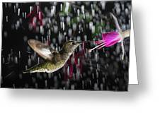 Hummingbird Hovering In Rain With Splash Greeting Card
