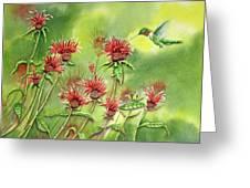 Hummingbird In Beebalm Greeting Card