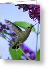 Hummingbird In Butterfly Bush Greeting Card