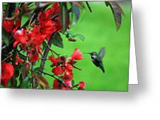 Hummingbird In The Flowering Quince - Digital Painting Greeting Card