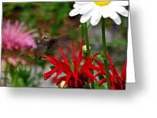Hummingbird Mid Flight Greeting Card