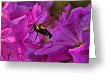 Hummingbird Moth On Azalea Greeting Card