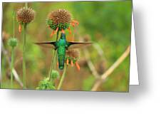 Hummingbird Next To A Wildflower Greeting Card