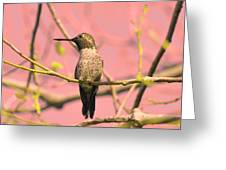 Hummingbird On A Branch Greeting Card