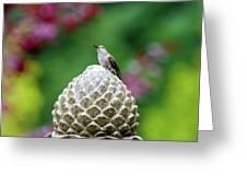 Hummingbird On Garden Water Fountain Greeting Card