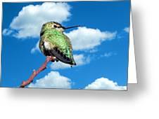 Hummingbird On High Greeting Card