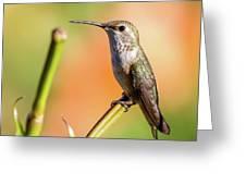 Hummingbird Perched II Greeting Card