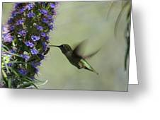 Hummingbird Sharing Greeting Card