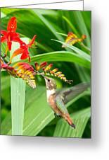 Hummingbird Snacking Greeting Card