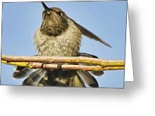 Hummingbird Spreading Wings Greeting Card