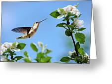 Hummingbird Springtime Greeting Card